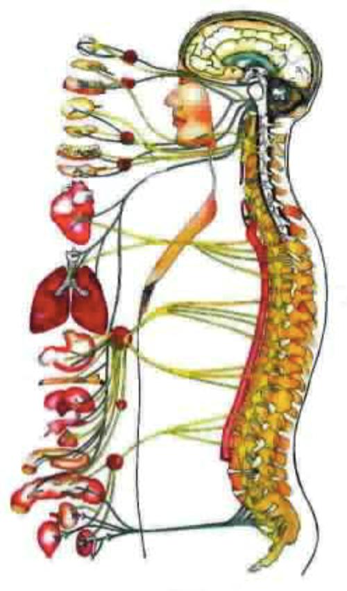 pancia gonfia e dolori schiena